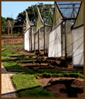 macadamia nursery shade houses